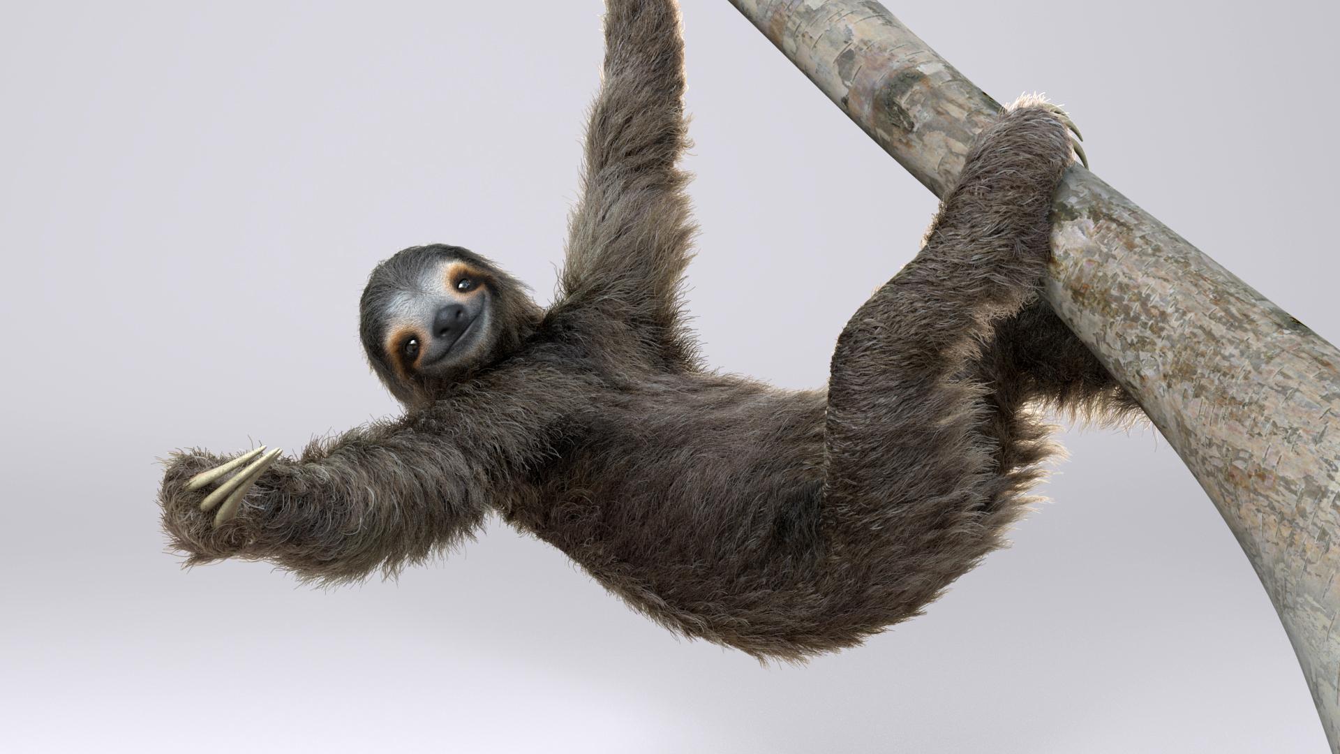 sloth_model_texture_fur_V08